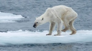 Images of a dead and dying polar bear have stirred controversy after the photographer claimed that the bear died because of climate change.