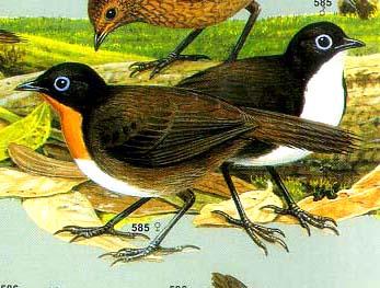 24birds.net
