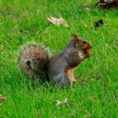 Embracing the Squirrel Community on Campus
