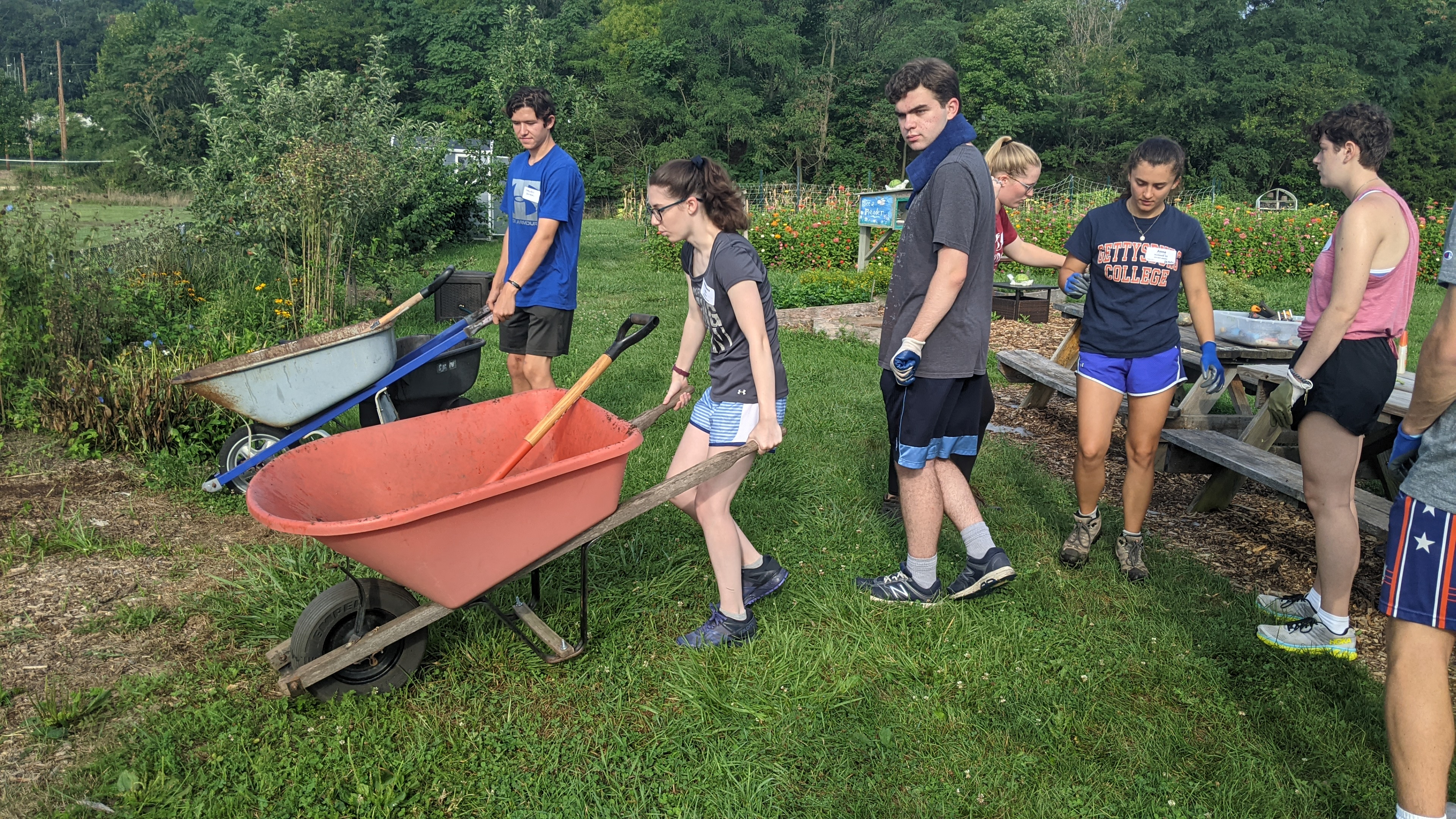 First-years carry wheelbarrows to begin weeding at the Painted Turtle Farm (Photo Maggie Galloway/The Gettysburgian)
