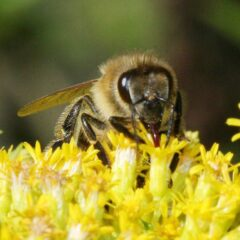 Pesticides Found in Honey Samples Across the Globe