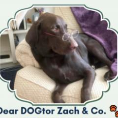 Dear Dogtor Zach: Finding Motivation