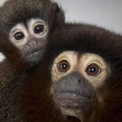 Primate brain complexity may be linked to fruit
