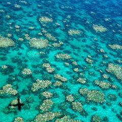 Great Barrier Reef in jeopardy due to climate change